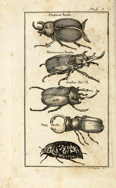 n225_w1150 by BioDivLibrary on Flickr. Beetles The natural history of insectsPerth :Printed by R. Morrison Junior,1792.biodiversitylibrary.org/item/55513