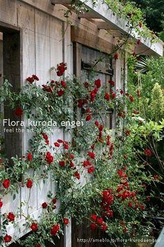 フローラのガーデニング・園芸作業日記-ヨセミテフォール