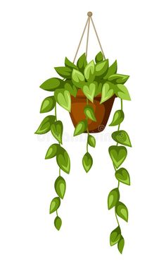 Photo about Vector illustration of green houseplant in a pot isolated on a white background. Illustration of clip, natural, stem - 45701311