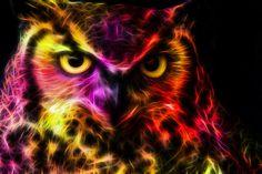 Dat Owl Face Doe by minimoo64 on deviantART