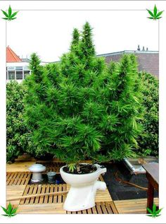 Cannabis Training University's photo. lol come on now! Get the pot off the pot