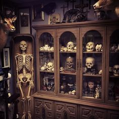 I would love a cabinet of skulls and a full skeleton in our home #dreamhome