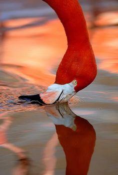 Birds ©: A Flamingo Pretty Birds, Love Birds, Beautiful Birds, Animals Beautiful, Foto Flamingo, Flamingo Art, Pink Flamingos, Animals And Pets, Cute Animals
