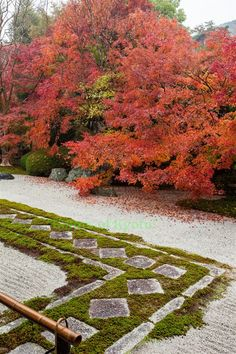 Tenryu-an temple, Kyoto, Japan   ...   moss/grass around walking stones versus all rocks   ...   love the beautiful maples
