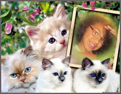 We enjoy creating ways for you to make your photos fun and creative, and share them with your friends and family. We develop photo edition apps for smartphones, tablets and Windows. Bichon Frise, Cat Art, Disney Characters, Fictional Characters, Fox, How Are You Feeling, Kitty, Disney Princess, Create