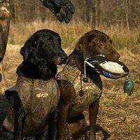 Hunting Retrievers-Training