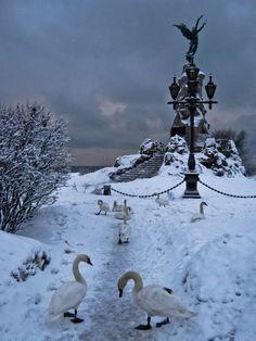 Amazing Tallinn - swans in winter!! #tallinn #estonia www.tallinn.com