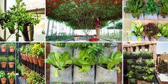 Las 10 hortalizas y plantas perfectas para utilizar en cultivos verticales y urbanos - Sun, Hothouse, Vegetables Garden, Vegetable Garden, Urban, Gardens, Plants