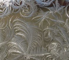Icy Ferns on a Cold Window.