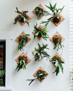 learn how to create a mounted living wall