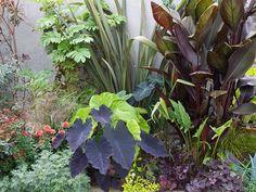 え~、 今日は、いつも乙庭の写真に写っていながら、 最近、メインで記事にすることがなかった カンナ オーストラリア Canna 'Australi... Garden Inspiration, Garden Ideas, Dry River, Tropical Landscaping, Green Flowers, Outdoor Entertaining, Garden Styles, Dream Garden, Outdoor Gardens