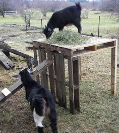 just pallets some 2x4s and nails. No help from the goats.