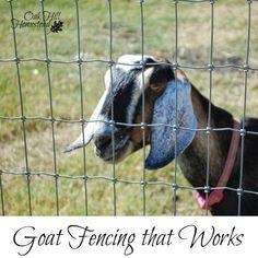 Different goat raising hobby farms Start today Emergency Binder, Emergency Preparedness Kit, Emergency Preparation, Survival Prepping, Goat Fence, Goat Care, Raising Goats, Pallet Fence, Oak Hill