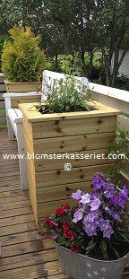 Isolerte blomsterkasser/ blomsterkasse fra Blomsterkasseriet. Veranda terrasse altan platting. Rosebusk og thuja i mindre blomsterkasser