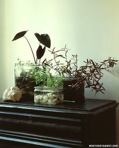 SO COOL! Indoor Water Gardens! You don't use soil just place the plant in water they are so cool! You will love them! | Martha Stewart