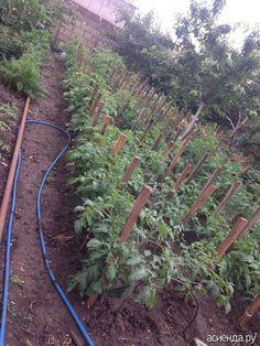 Теплые грядки для помидор и морковки: Группа Наши грядки
