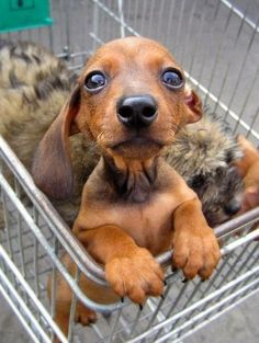 U said I was going to get a treat when we went shopping.. weres my treat.. i will starting crying like a baby any minute for my treat u promised me.. i will pull a tantrum right here in the store and everyone will look at you ..will u give me my treat..please..hope he got his treat perhaps two or three