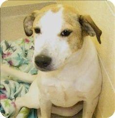 Birmingham, AL - Retriever (Unknown Type) Mix. Meet Jojo a Dog for Adoption.