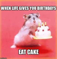 When life gives you birthdays, eat cake.                                                                                                                                                                                 More