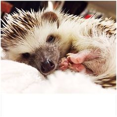 """I woke up like this."" 