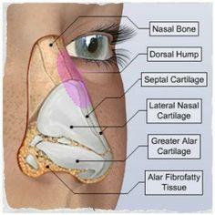 jacksonville florida facial plastic surgeons