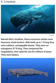 You can't tell me we know for sure that this is gone Creepy Facts, Wtf Fun Facts, Random Facts, Uber Facts, Extinct Animals, Prehistoric Animals, Scary Ocean, Animal Facts, Animal Memes