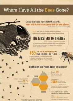 Bee Identification, Honey Bee Facts, Bee Hive Plans, Beekeeping For Beginners, I Love Bees, Bee Farm, Backyard Beekeeping, Bee Friendly, Bee Jewelry