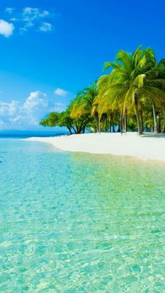 Tropical Beaches With Palm Trees Tree Photography, Landscape Photography, Dream Vacations, Vacation Spots, Natur Wallpaper, Places To Travel, Places To Visit, Tropical Beaches, Photo Tree