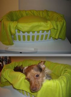 Make a dog car seat using a laundry basket, a pillow, and a blanket.