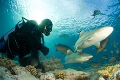 Deep Sea #Diving with #Sharks in the #Seychelles