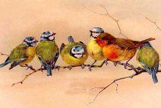 Vintage Bird Tattoo, Vintage Birds, Logo Vintage, Poster Vintage, Vintage Bird Wallpaper, Audubon Prints, Vintage Bird Illustration, Bird Poster, Bird Drawings
