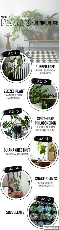 6 best indoor house plants. Plantas de interior.