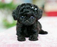 Aw tea cup pup.