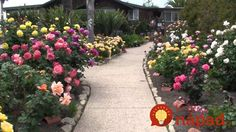 Take a tour of the beautiful rose gardens on the Bragg Organic Farm in Santa Barbara, California. Organic Farming, Organic Gardening, Beautiful Roses, Beautiful Gardens, Rose Garden Portland, Rose Garden Design, Gardens Of The World, Coming Up Roses, Garden Pictures