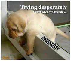 Get over Wednesday quotes quote days of the week wednesday hump day wednesday quotes happy wednesday
