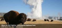 Sometimes I can't believe that we only live a little over an hour from Yellowstone National Park. It is an amazing place to visit!