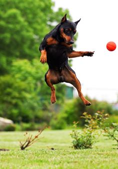 Where did the ball go...Cute #dog