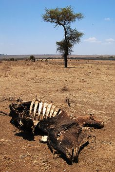FROM DROUGHT TO DESTINY: 'Best ways to manage responses to recurring drought in Kenya's drylands', ILRI News Blog, 7 Aug 2011