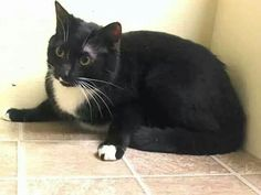 Please save Sisqo.beautiful girl was trapped and brought to the shelter.was someone's pet.please save her life.from ACC shelter in New York City URGENT visit pets on death row on Facebook URGENT