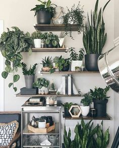A new Pasadena boutique is dedicated to nothing but indoor house plants Room With Plants, House Plants Decor, Plant Decor, Office With Plants, Shelves With Plants, Shelves On Wall, Jungle Living Room Decor, Floating Shelves, Plant Rooms