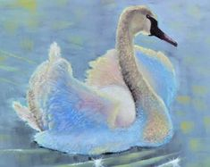 """Backlit by the evening sun, an adolescent swan makes a debut with her pretty shimmering plumage. This is a 12x12"""" square premium quality giclée art print from an original oil painting by UK artist Ellisa Hague.  Please visit www.EllisaHagueOriginal.com or the Etsy Shop to view more pieces."""