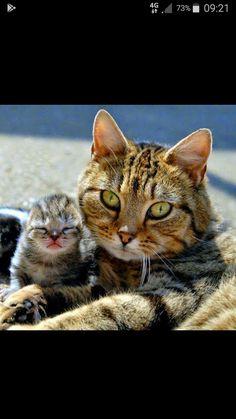 Mom Cat kitten