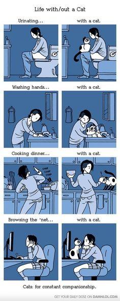 Kitty Cat Madness