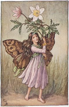 Illustration for the Windflower Fairy from Flower Fairies of the Spring.  A girl fairy stands holding windflowers.    Author / Illustrator  Cicely Mary Barker