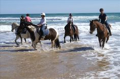 The Official Tourism Website of the Mornington Peninsula Equestrian Outfits, Equestrian Style, Trail Riding, Horse Riding, Learn To Scuba Dive, Tourism Website, Fishing Charters, Underwater World, Paddle Boarding