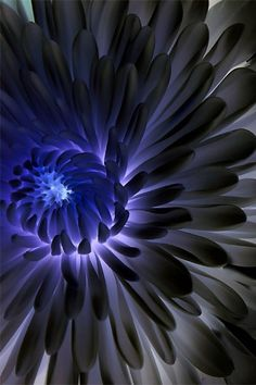 Another blue flower..