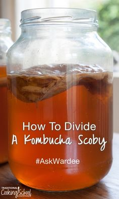 How To Divide A Kombucha Scoby #AskWardee 083 | You're making Kombucha , and it's going great. But after several batches, suddenly you notice your scoby (the mother culture) has gotten so big and thick it's taking over the jar.... | TraditionalCookingSchool.com