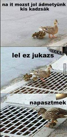 Kiskazsák ljuknál Funny Quotes Wallpaper, Funny Jokes, Hilarious, Comedy Memes, Tears Of Joy, Jokes Quotes, Funny Pins, Really Funny, Funny Moments