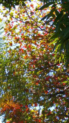 Altas arvores misturam suas folhas.
