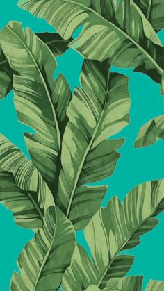 🌟Tante S!fr@ loves this📌🌟 Plant Wallpaper, Tropical Wallpaper, Iphone Background Wallpaper, Aesthetic Iphone Wallpaper, Cool Wallpaper, Aesthetic Wallpapers, Screen Wallpaper, Trendy Wallpaper, Flower Wallpaper